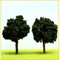 2 Acacias Boules 7cm